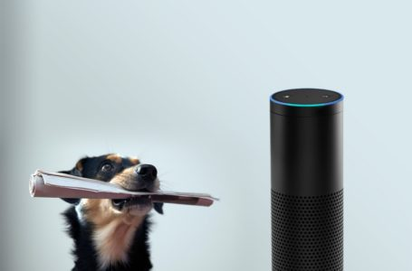 Amazon Echo and the net of factors that undercover agent on you