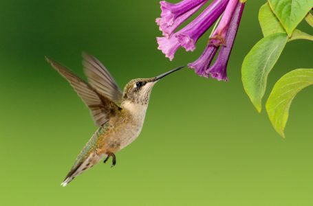 Jewel of nature:Tips for attracting hummingbirds